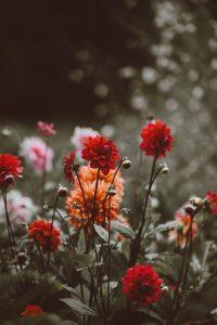 Child's photo of flowers