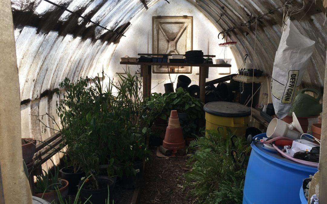 A Cozy Greenhouse